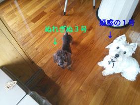 NCM_1469-1.jpg