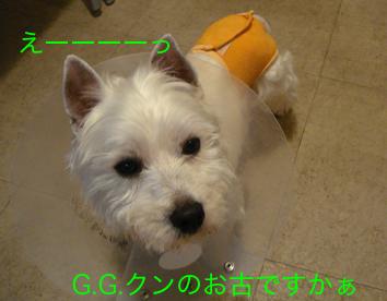 DSC02730.jpg