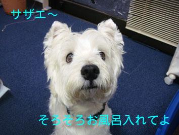 DSC03745のコピー.jpg