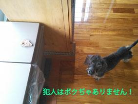 NCM_1464のコピー.jpg