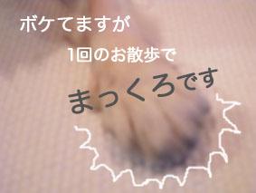 RIMG0004.jpg