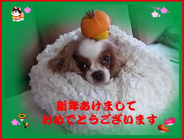 RIMG0005のコピー.jpg