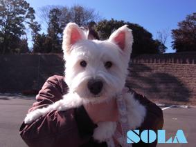 SORA2のコピー.jpg